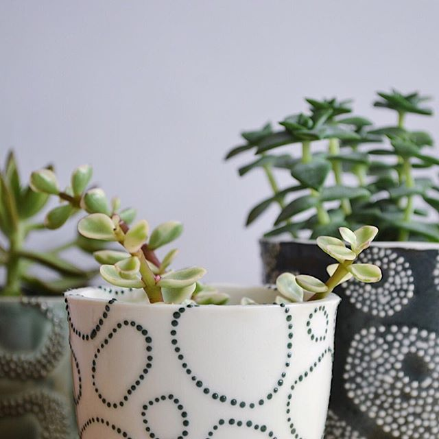 Feeling all the greens 🌿🌱🍃 ⠀⠀ #ceramics #clay #pottery #porcelain #handmadepottery #handmadeintheuk #madeinbritain #handmadeisbetter #contemporarycraft #contemporaryceramics #modernmaker #makersgonnamake #createmakeshare #ceramicsaretrending #cremerging #dmucraft #ceramicsmagazine #glazemagazine #potterylove #potteryforall #collectandcurate #etsyseller #etsyfinds #etsyshop #shelfie #handmadeplanter  #plantlove #plantlife #houseplantclub #craftsposure @craftsposure @dmu