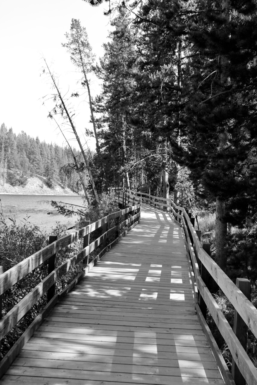 Making Our Way - Yellowstone