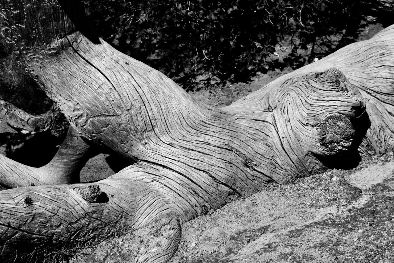 Twisting Torso, Fallen Tree - Arches