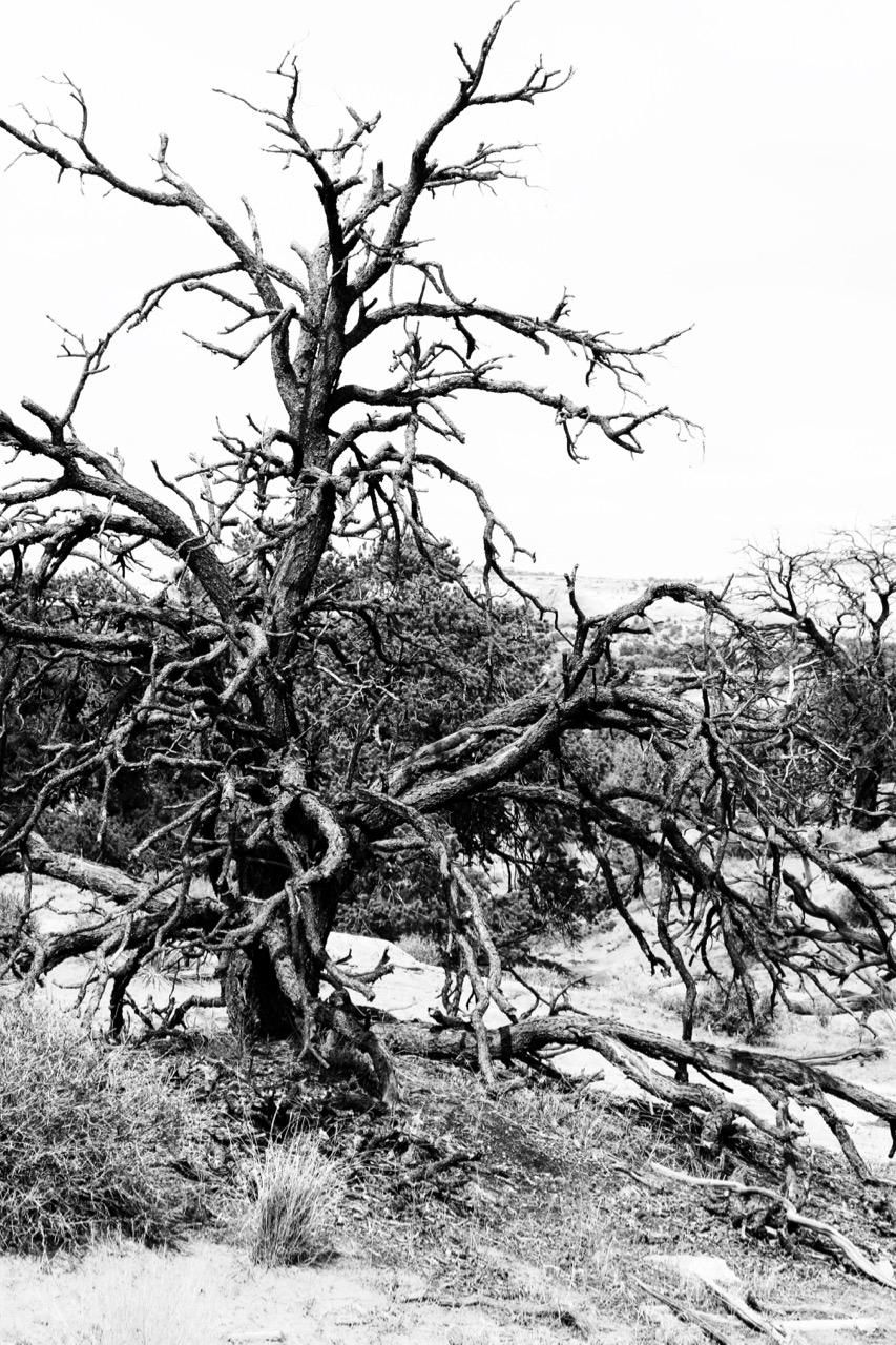 Lightning Strike - Canyonlands