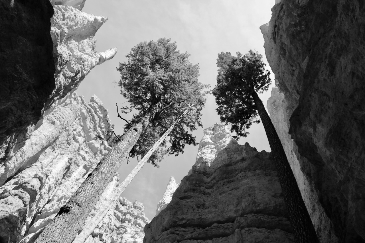 Hoodoos and Trees - Bryce Canyon