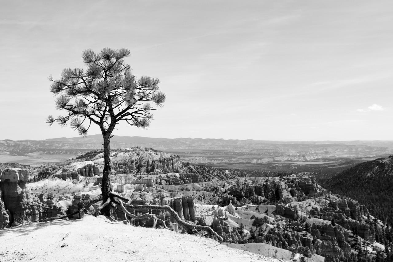 Balancing Delicately - Bryce Canyon
