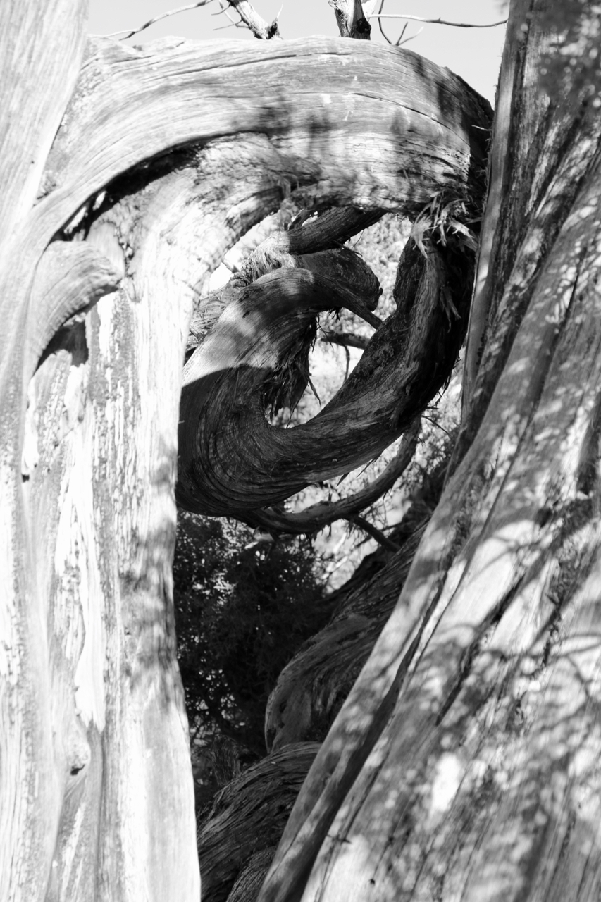 Wind-spun Spirals - Black Canyon