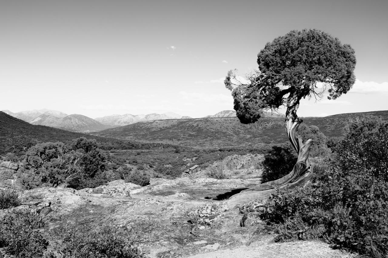 Windswept - Black Canyon