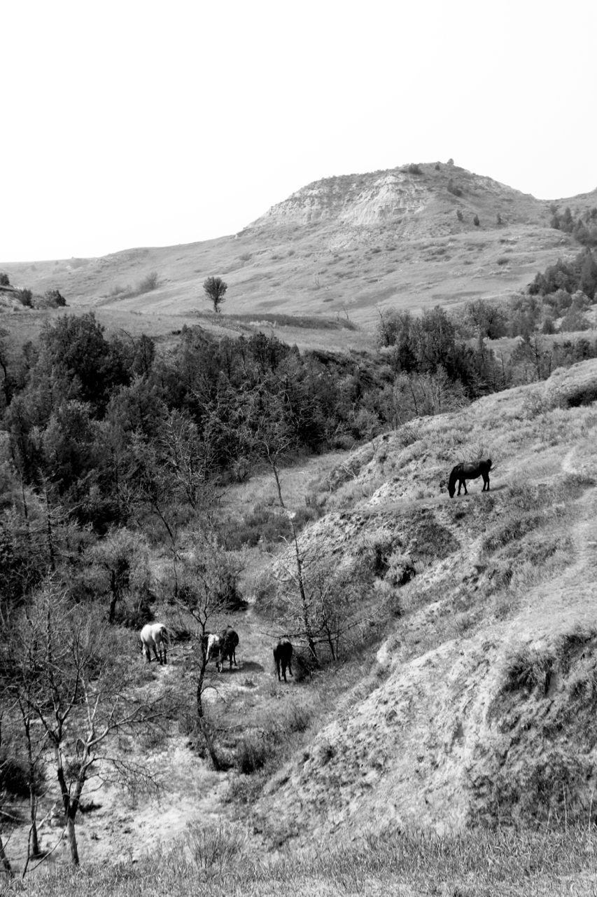 Wild Horses - Theodore Roosevelt