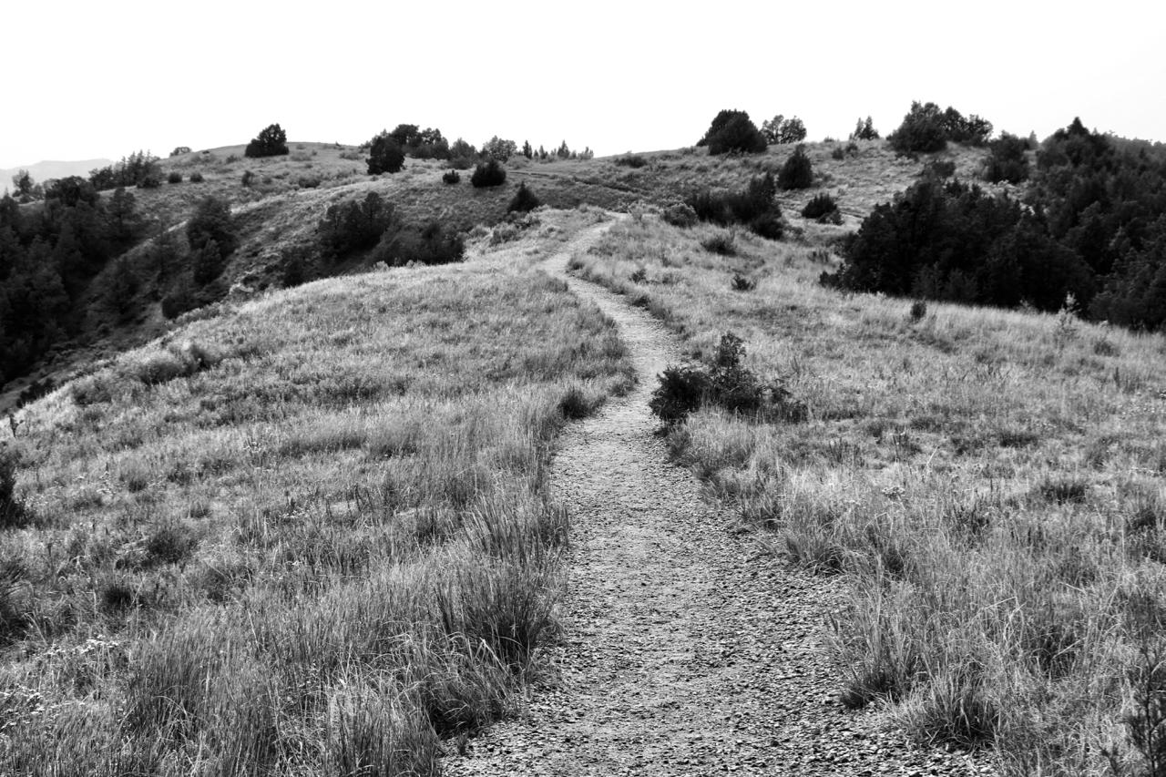 Winding Path - Theodore Roosevelt