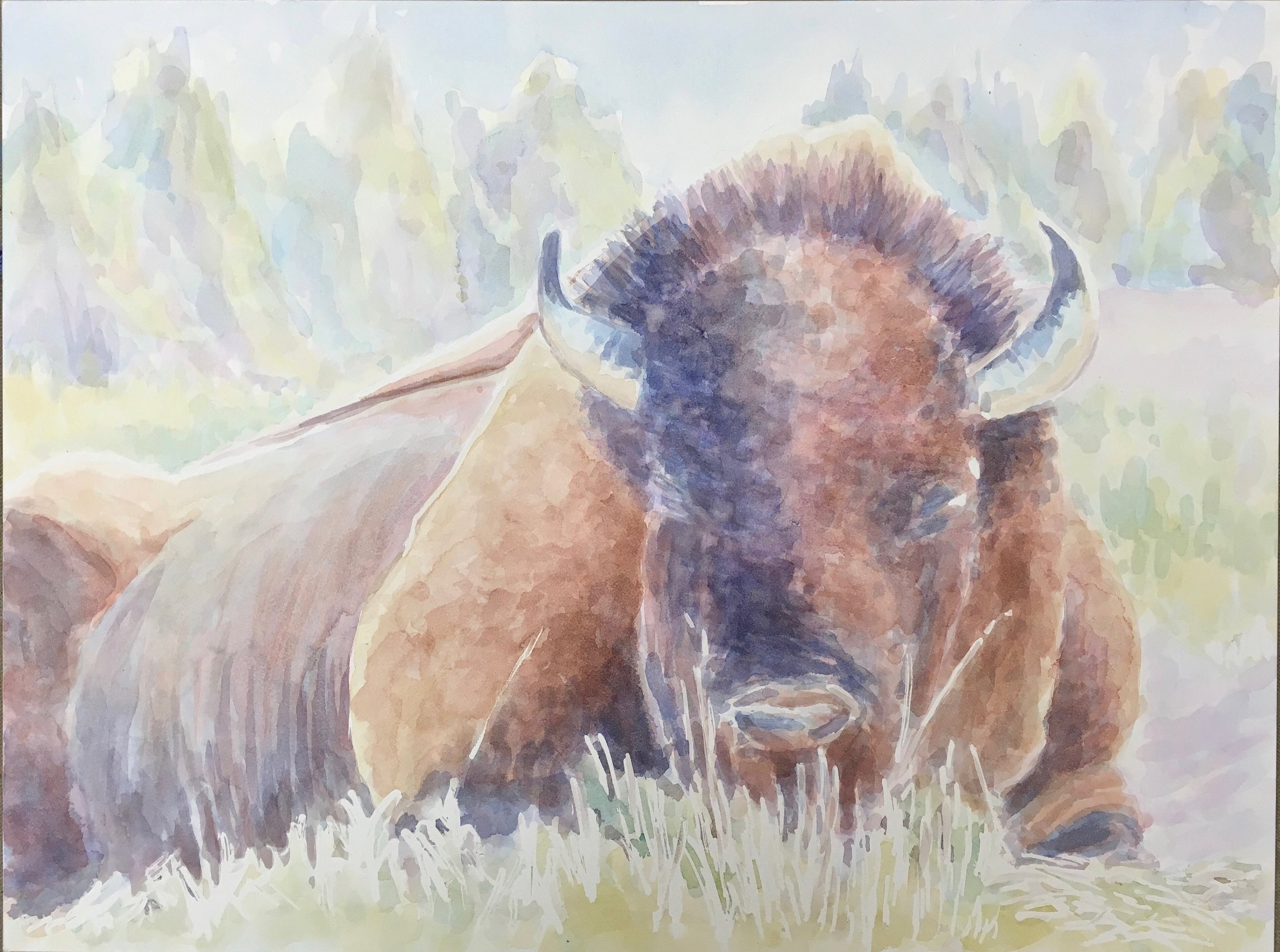 Bison Sleeping, Yellowstone National Park - watercolor