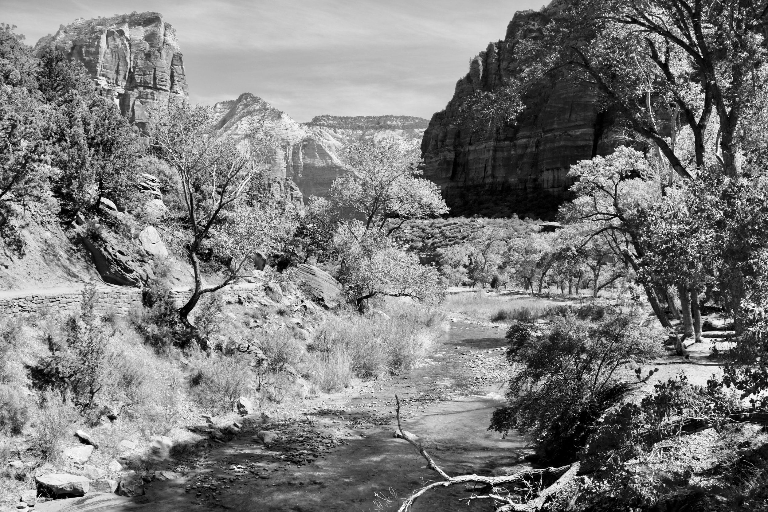 Water, Stone, and Flora - Zion