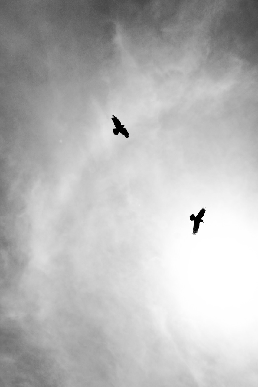 Ravens Watching Over Me, Grand Canyon