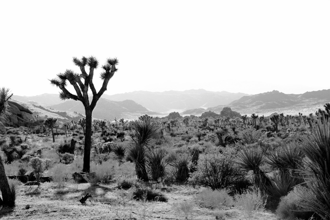 Quiet of Day's End - Joshua Tree National Park