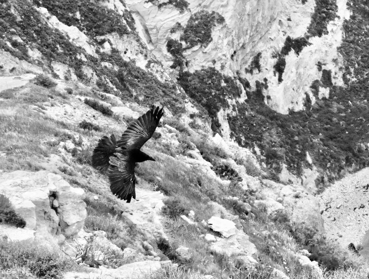 Looking Down on Raven's Flight - Santa Cruz Island, Channel Islands National Park