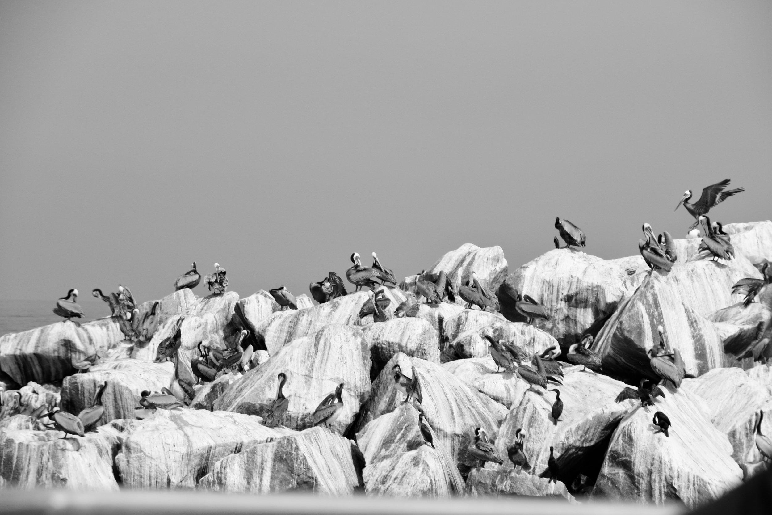 Pelican Rest - Channel Islands