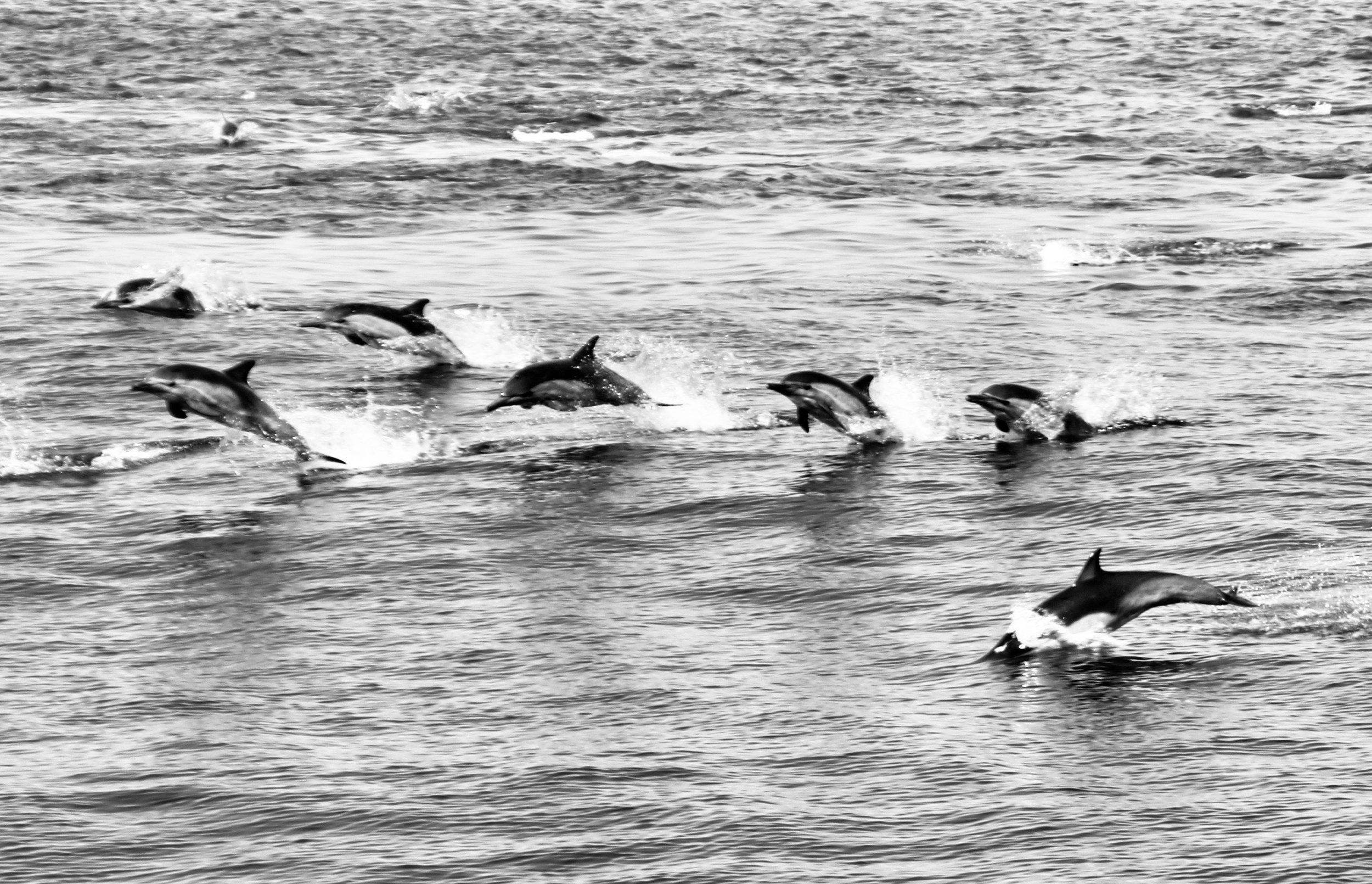 Racing with the Waves - Anacapa Island, Channel Islands