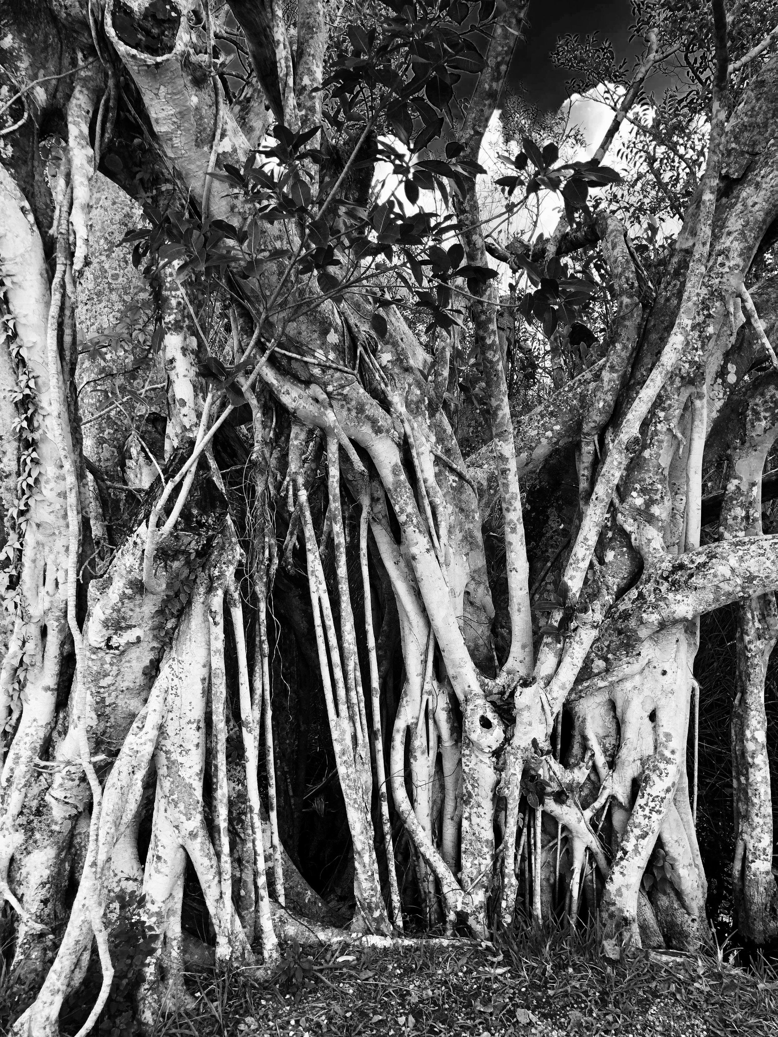 Textures, Everglades