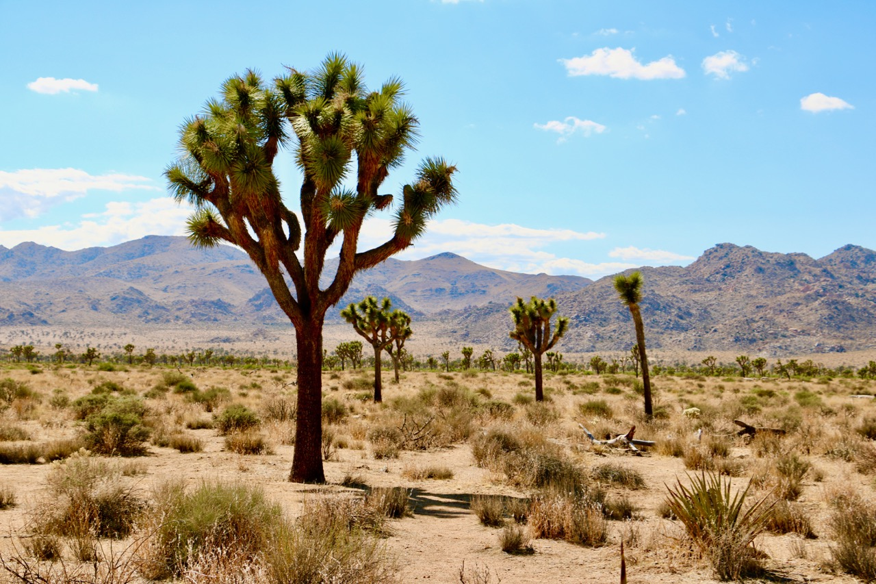 Joshua Tree National Park - May 2018