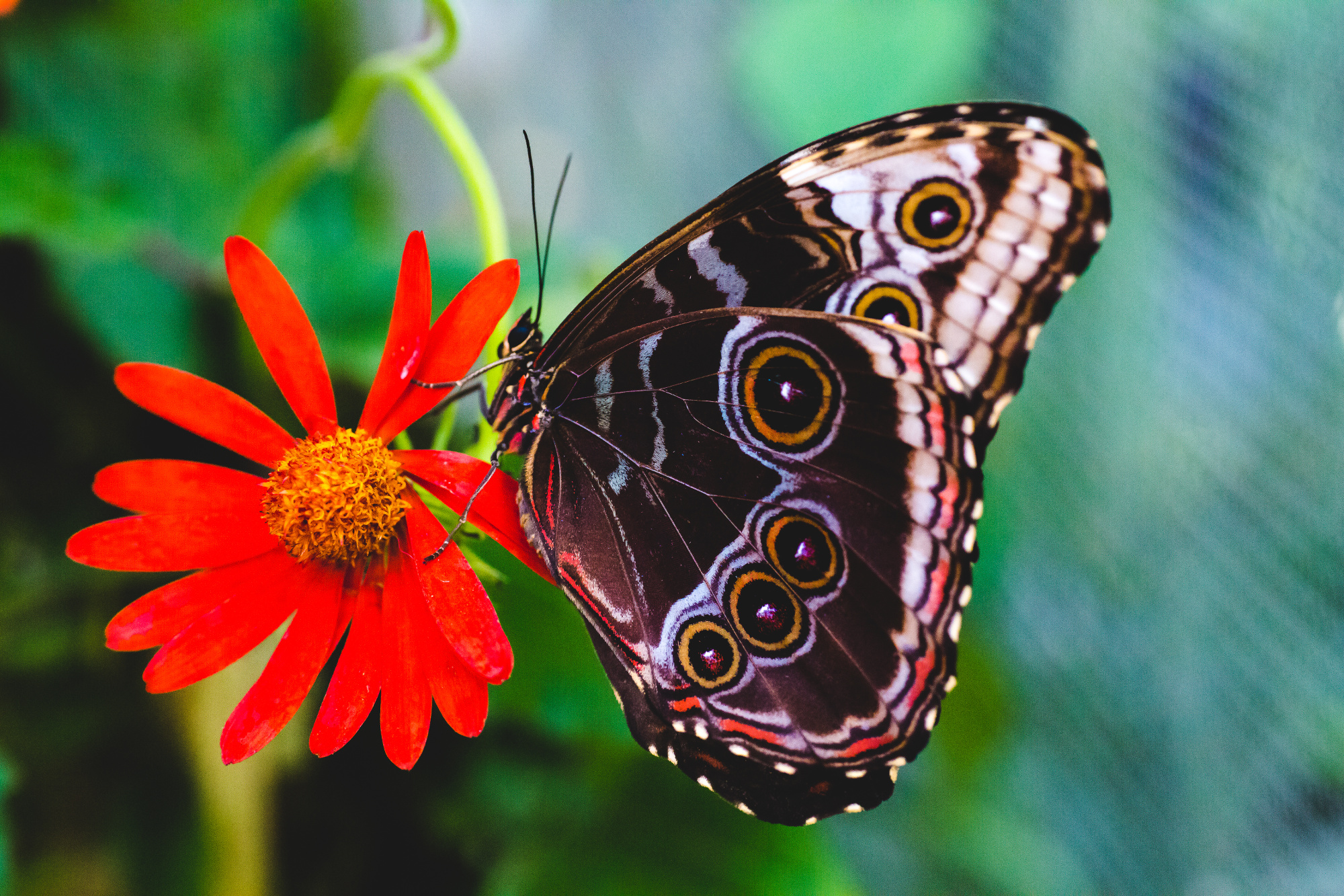 NCG_Butterfly_Exhibit-30.jpg