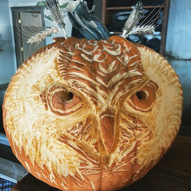After an hour long stare down, this year's pumpkin decided he was an owl.  #pumpkincarving #jackolantern #owlsofinstagram