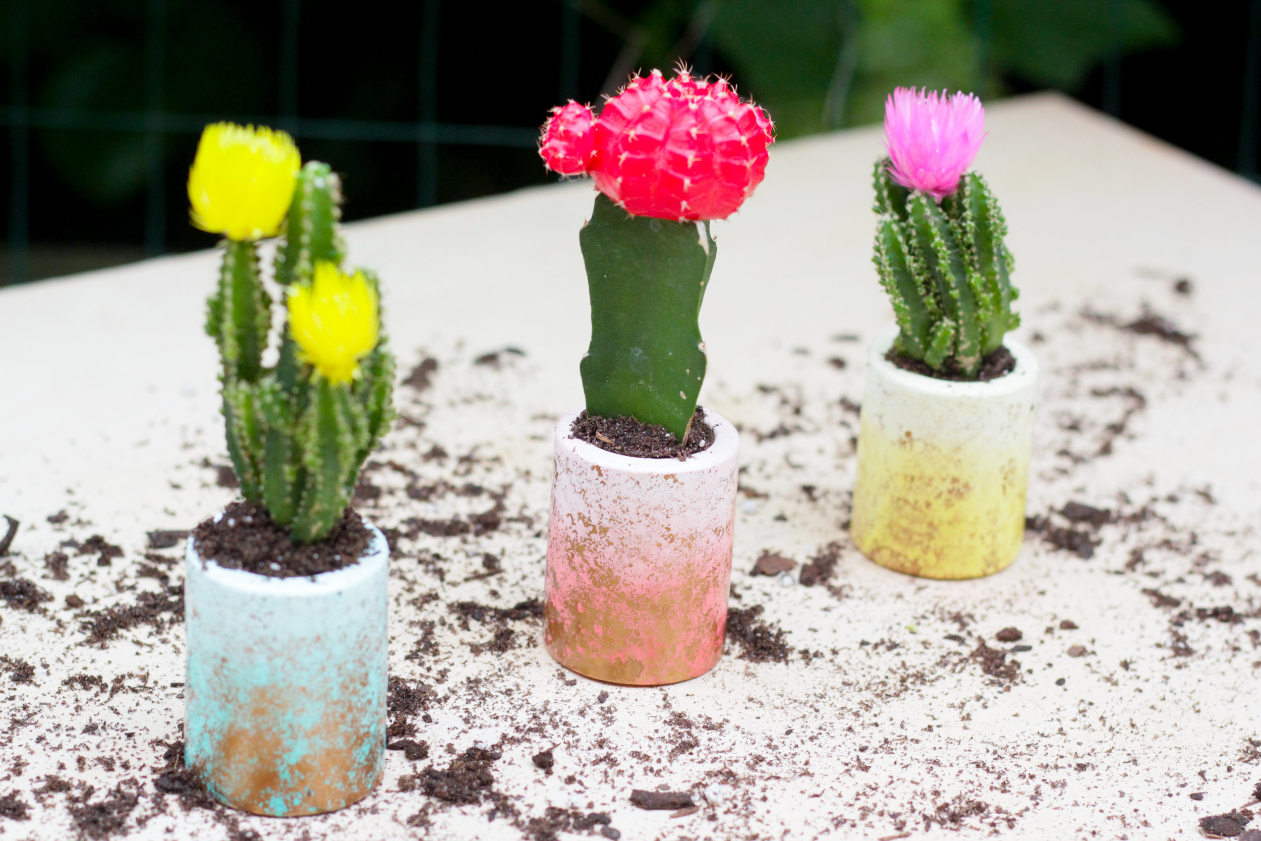 DIY Planters | Plaster of Paris Succulent Planters