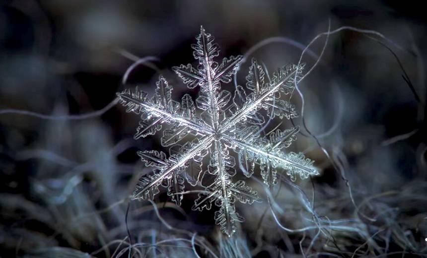 snowflakes.jpg.860x0_q70_crop-scale.jpg