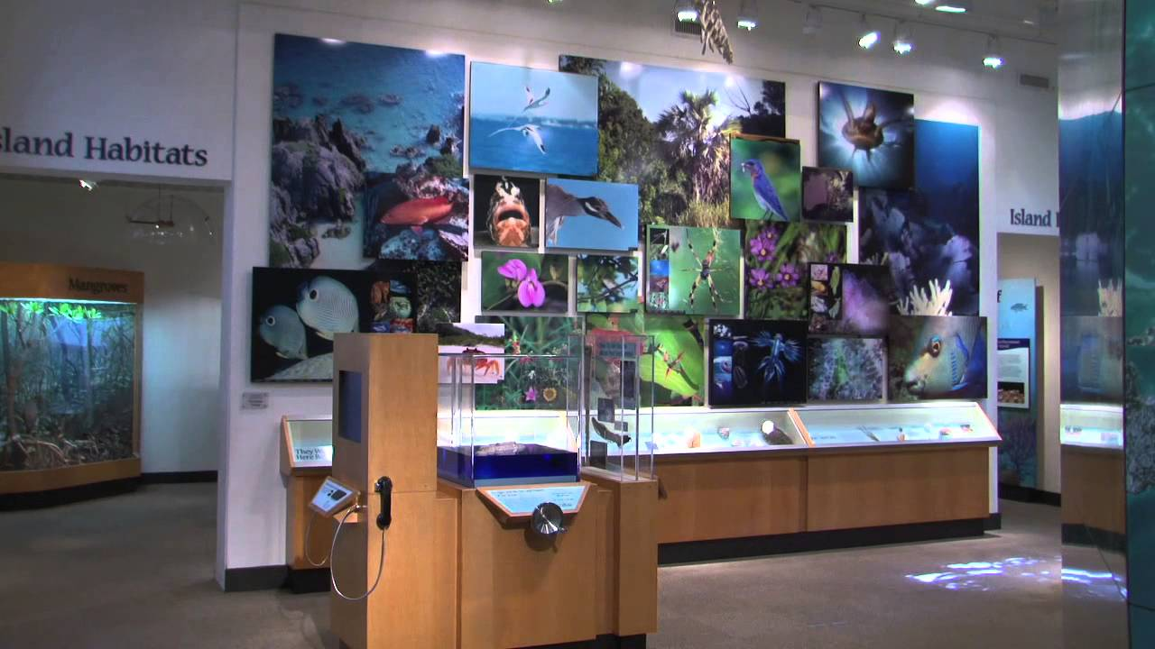 The Natural History Museum at the Bermuda Aquarium Museum and Zoo.