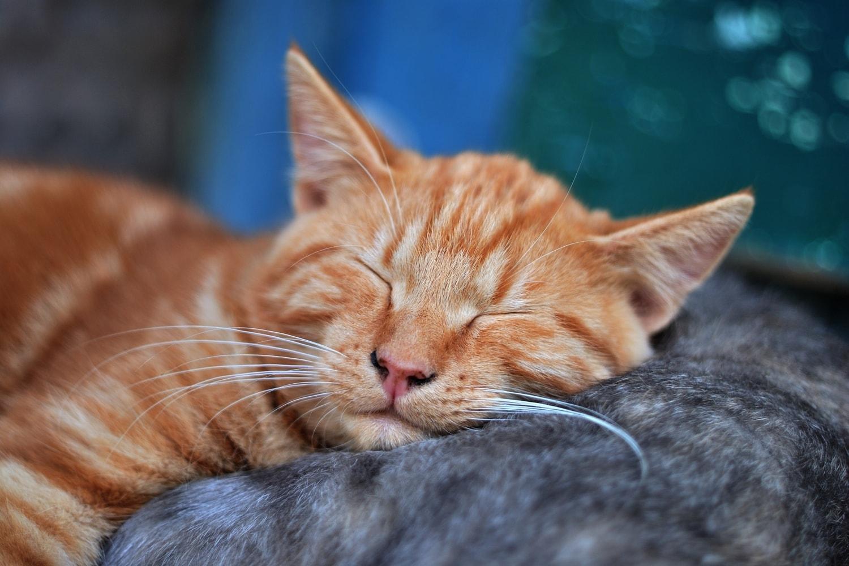 Muitos bichinhos sofrem com o  barulho , que pode ser especialmente cruel com os  animais , pois sua audição é mais sensível que a dos seres humanos