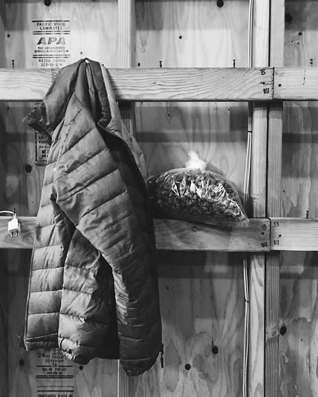 Still Life | Harvest 2018 #rp @ladyseedbotanicals ・・・ @nativeseedcannabis
