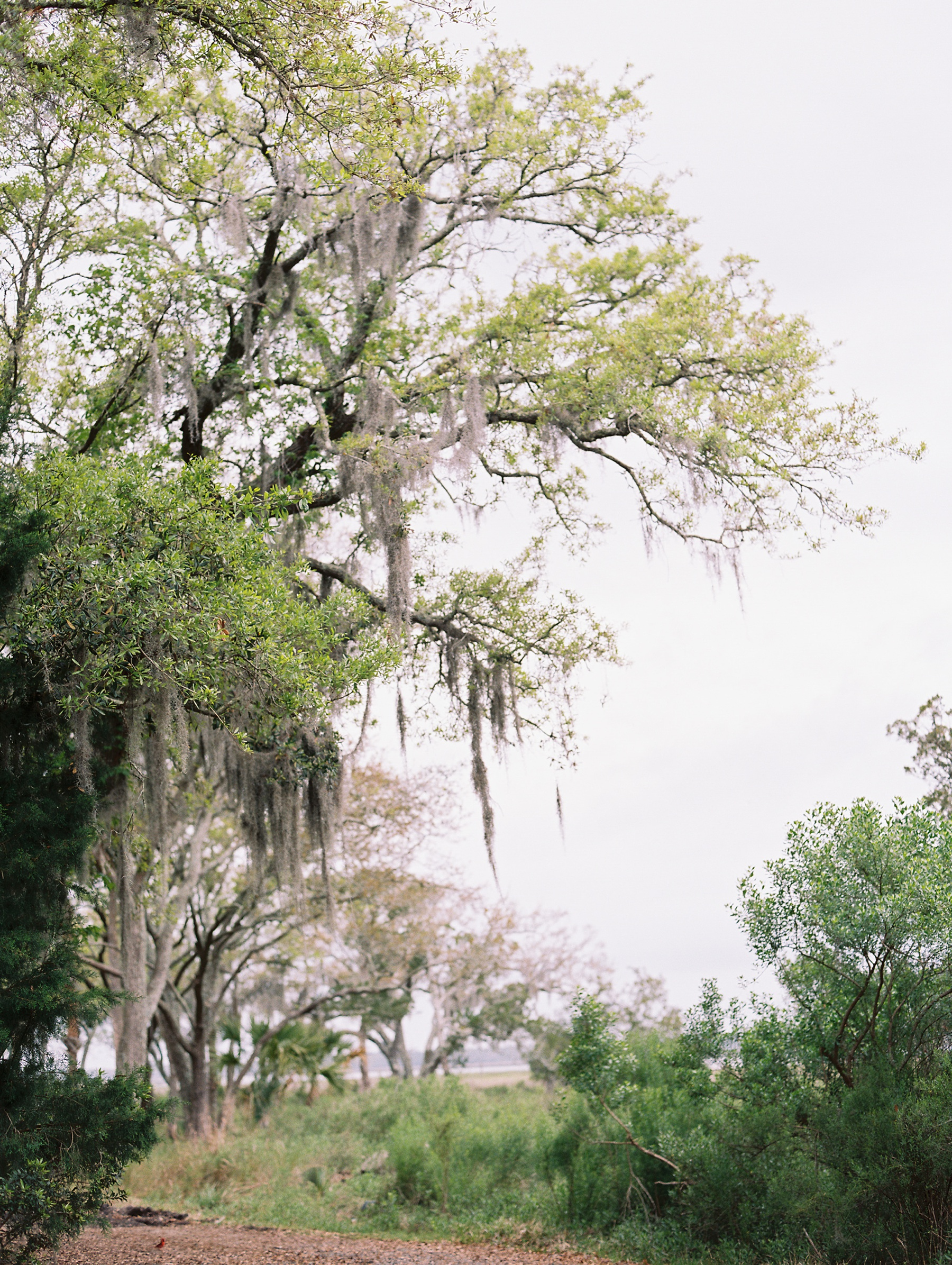 Charleston South Carolina Wedding Photographer_0269.jpg