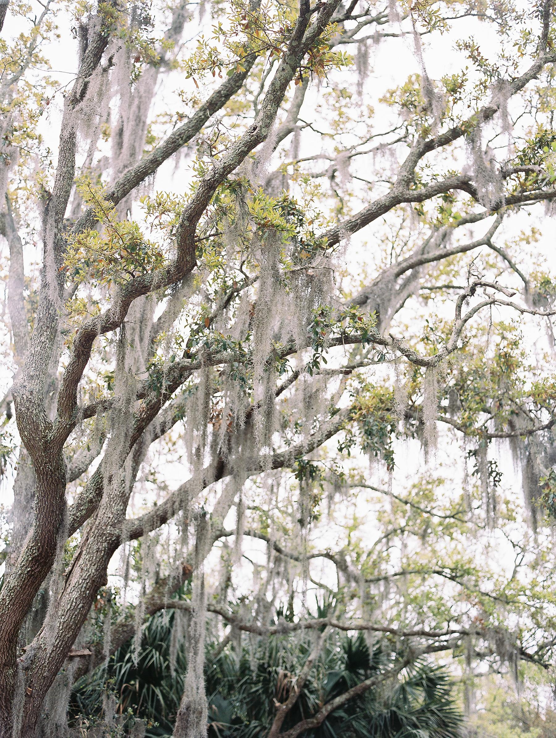 Charleston South Carolina Wedding Photographer_0322.jpg