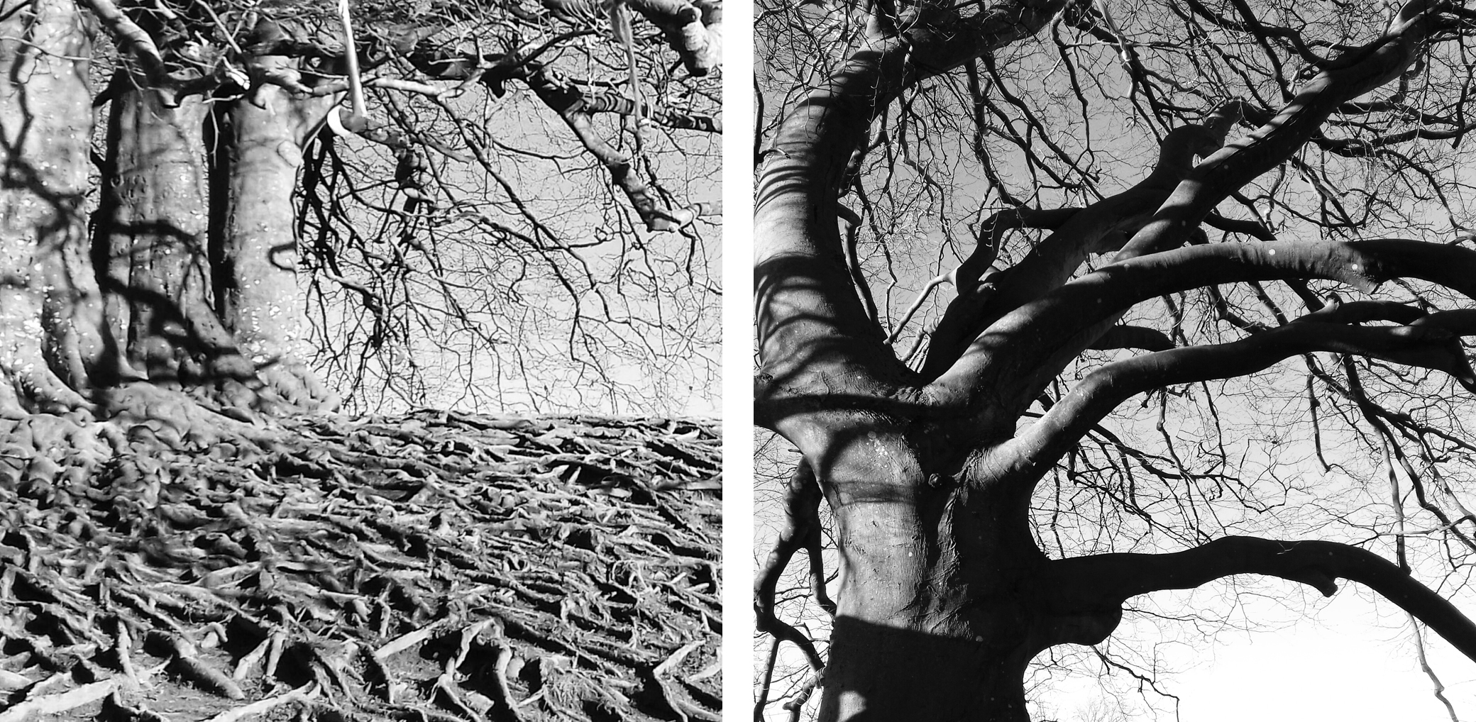 Rowena Gilbert Photography Inspiration - Amazing Tree Roots in Avebury, Wiltshire    Join me on Instagram www.instagram.com/rowenagilbertceramics