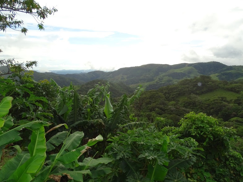 This beautiful photo was taken on the property of a Costa Rican citizen's house by Julie Israelson during the adventure to her cooking class (in which she learned how to make arepas) on November 16, 2016.  It overlooks the beautiful cloud forests of Monteverde, one of the most breathtaking mountainside views the world has to offer. The gap in the trees is partially shielded by plants, providing a glance into both worlds - the world where the details astound us and the world we admire from afar.   Words by Roxi Wessel.