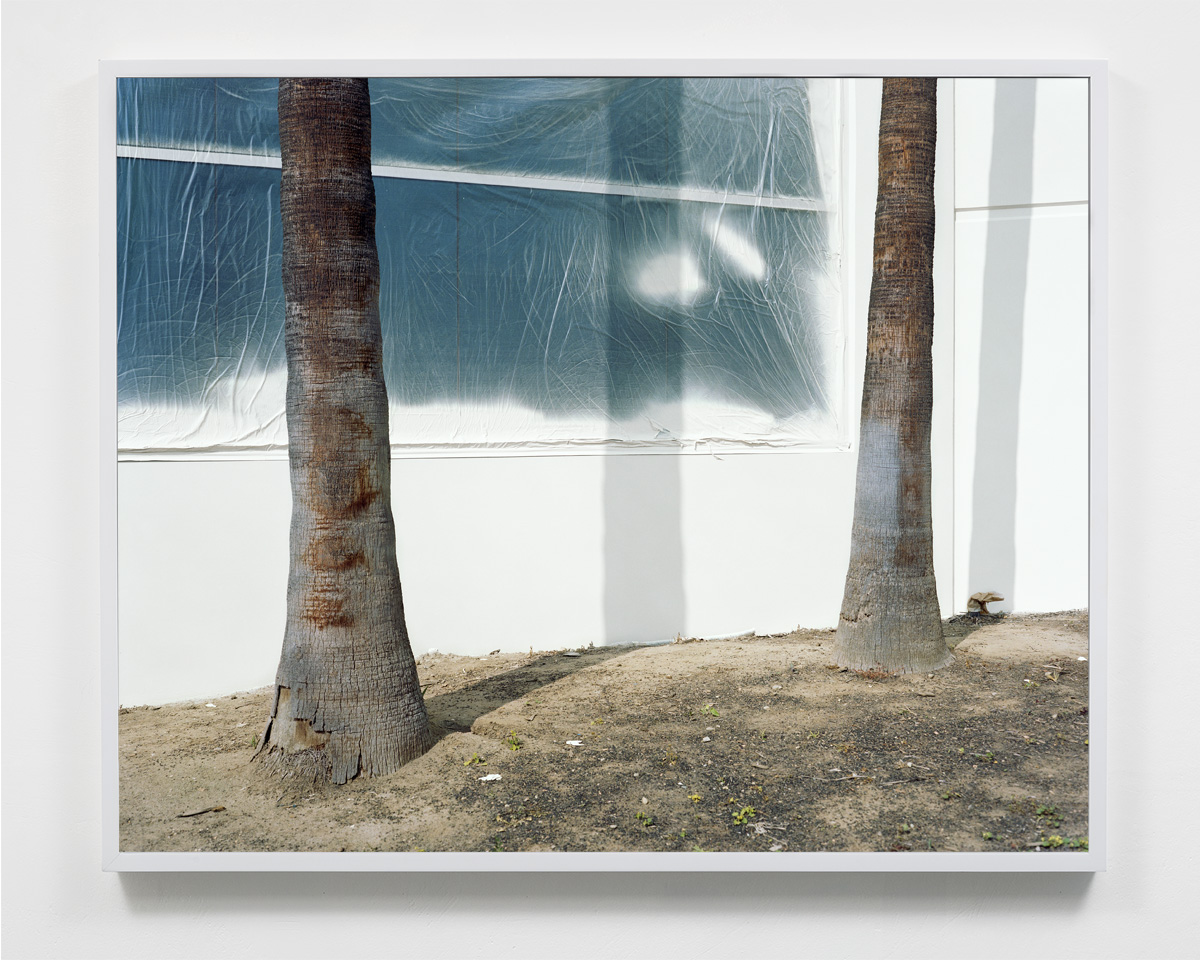 Untitled (Palms & Paint) , 32 x 40, Pigment based print, 2015