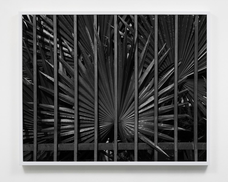 Untitled, 16 x 20, Gelatin silver print, 2019