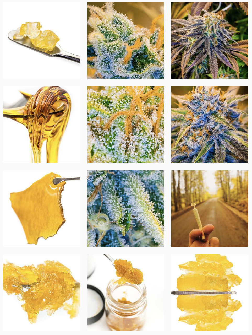 FRANKIEBOY PHOTOGRAPHY INSTAGRAM PAGE | ALL CONTENT CREATED BY COLORADO CANNABIS PHOTOGRAPHY X FBP