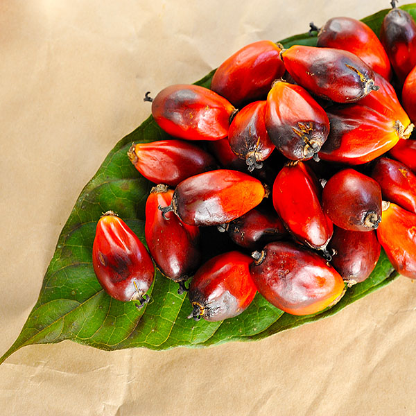 soap-ingredient-palm-oil.jpg