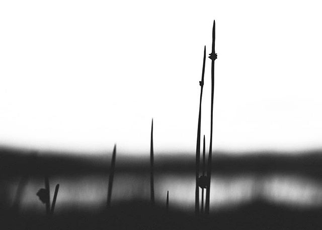 """""""Let it be still, and it will gradually become clear."""" . . . #laotzuquotes  #bwlandscapephotography  #bwphotography"""