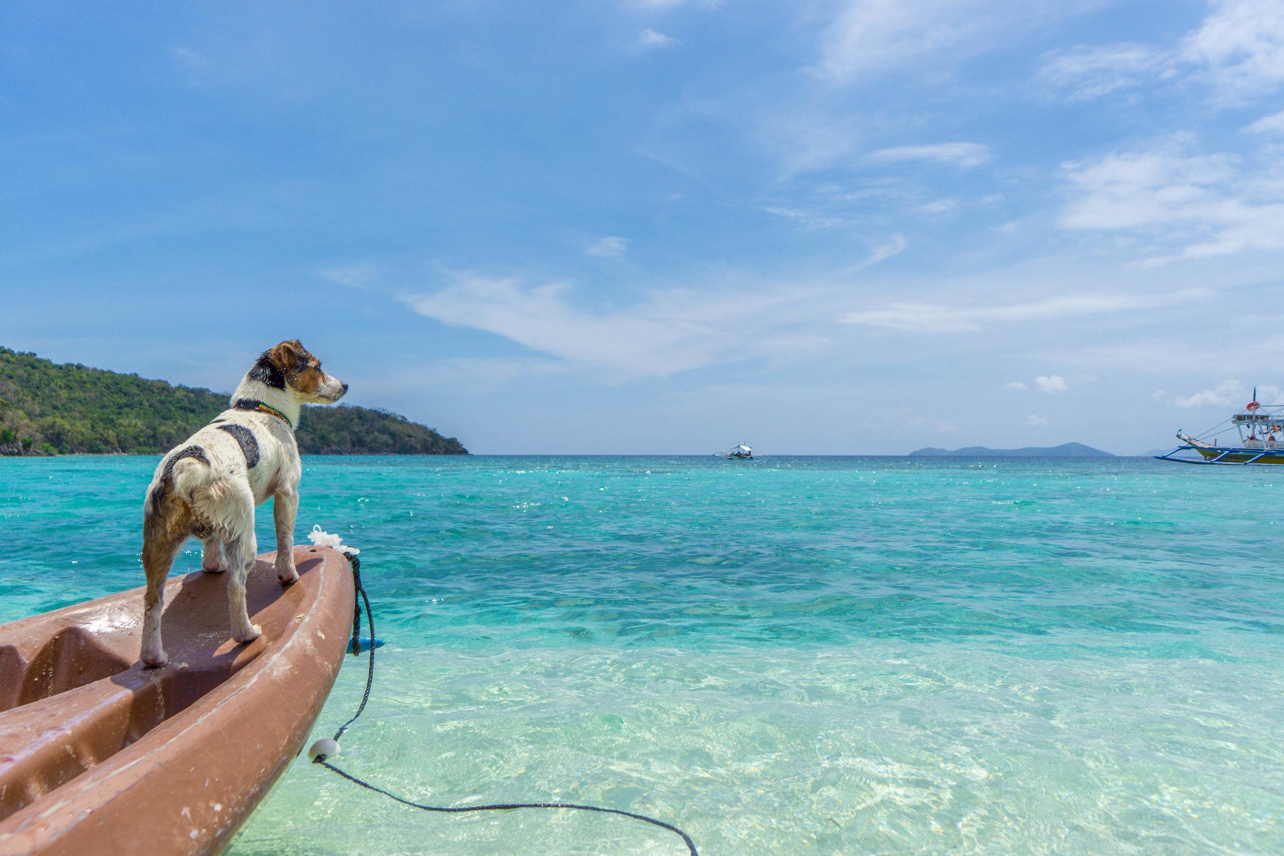 Amo, the island dog.