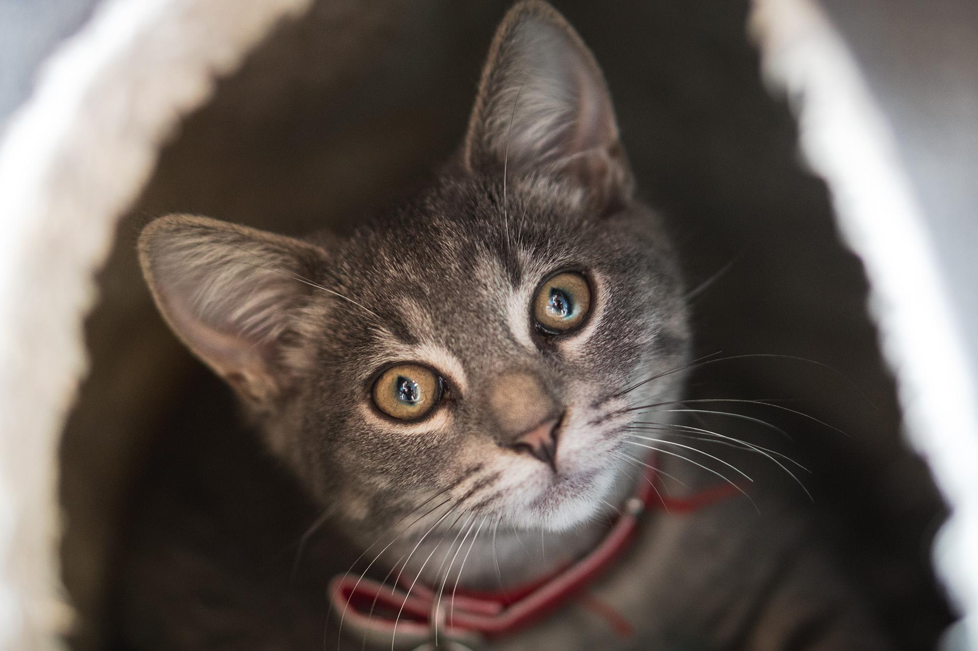 Matilda - Adopted 14/3/19