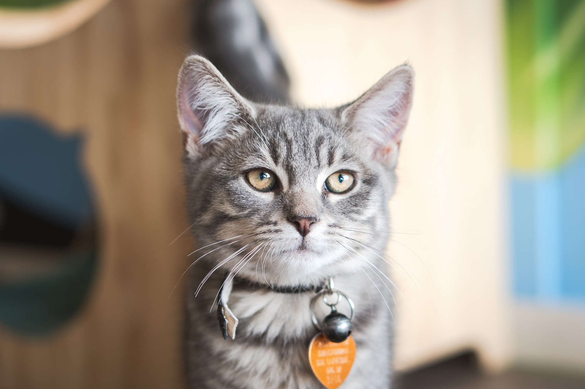 Larry - Adopted 14/3/19