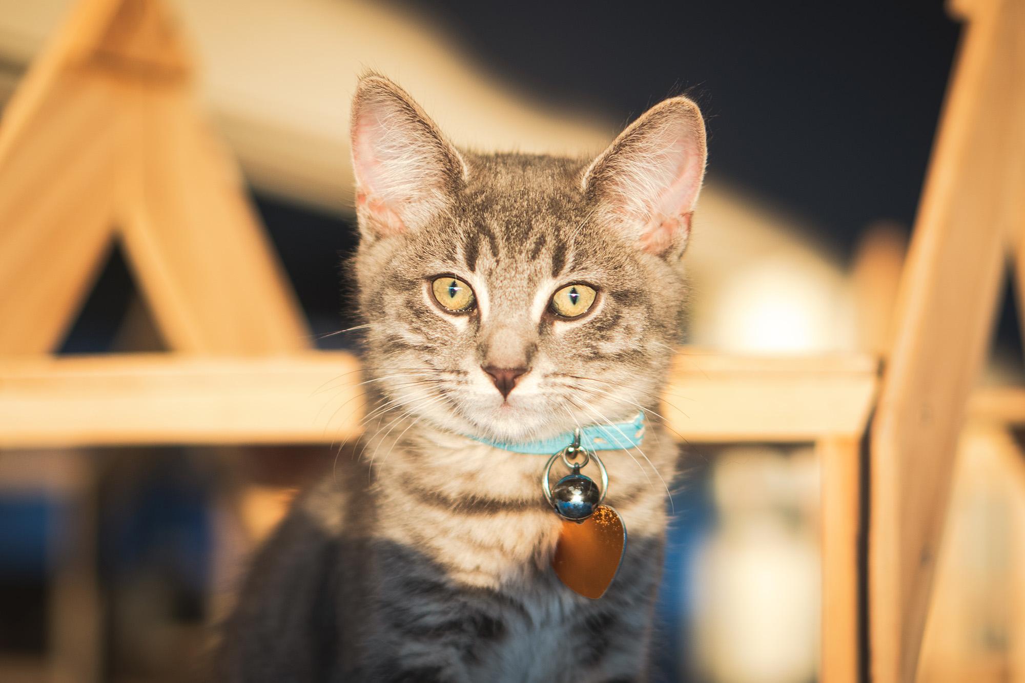 Jasper - Adopted 19/3/19