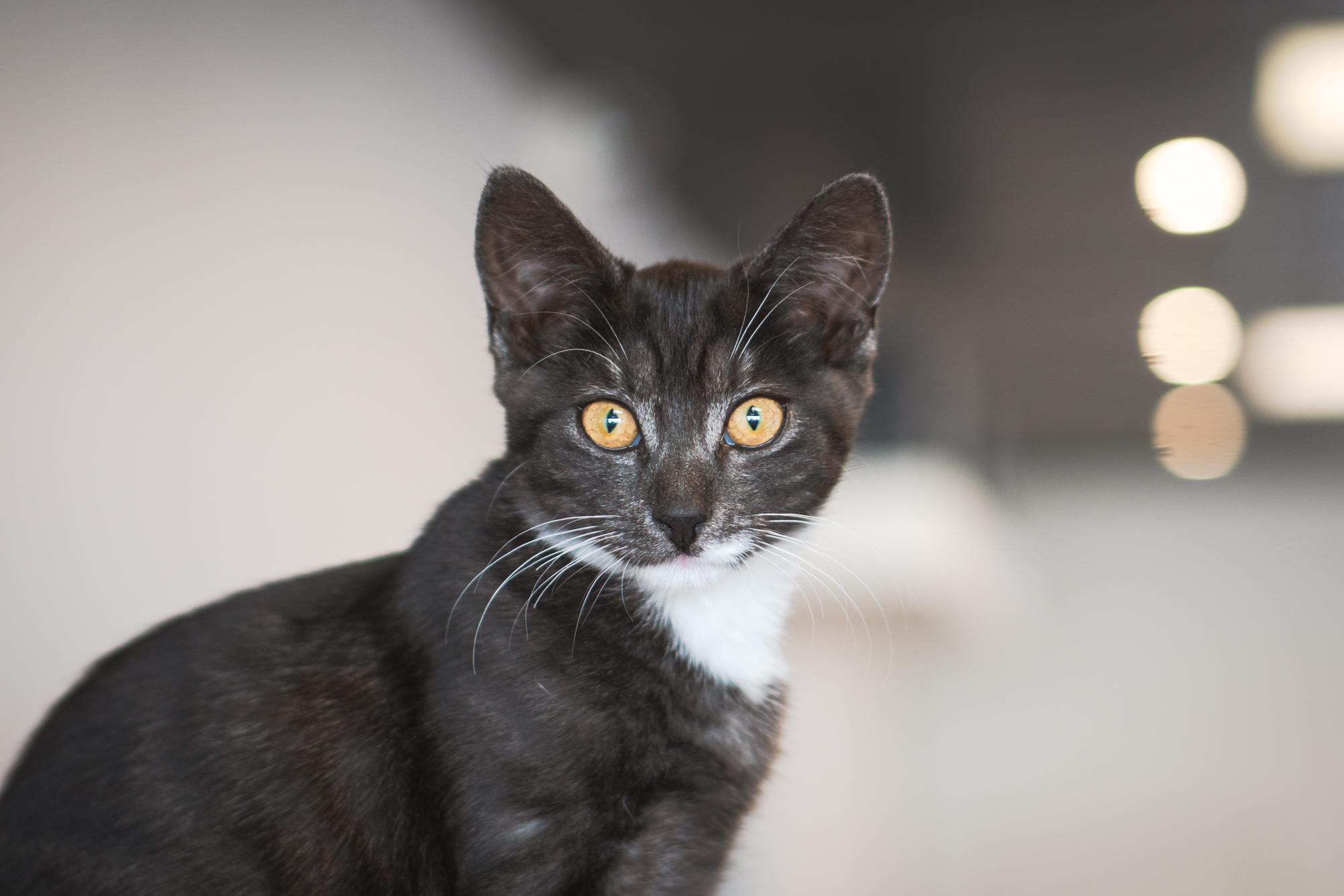 Freya - Adopted 23/4/19