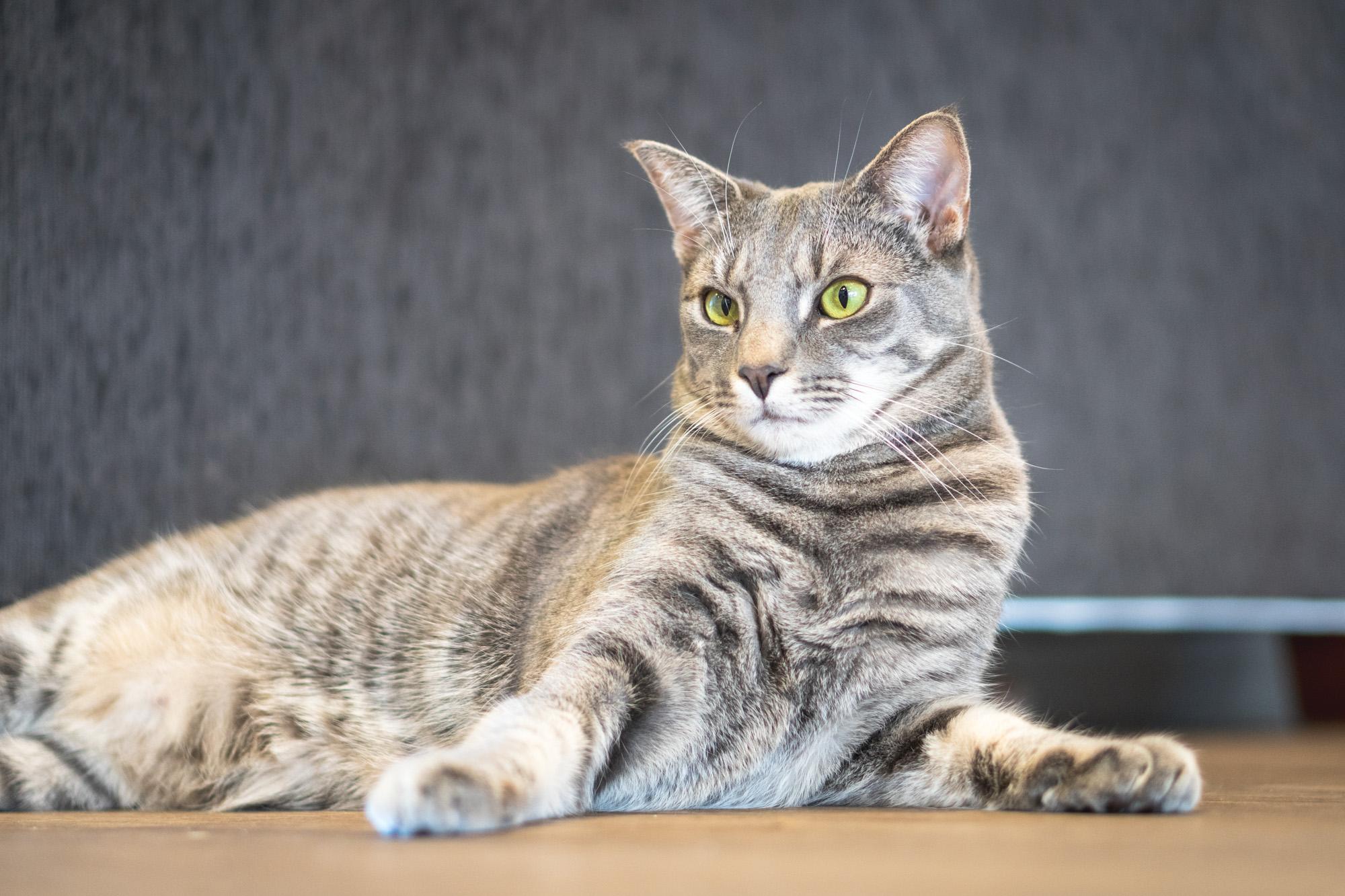 Leo - Adopted 30/4/19