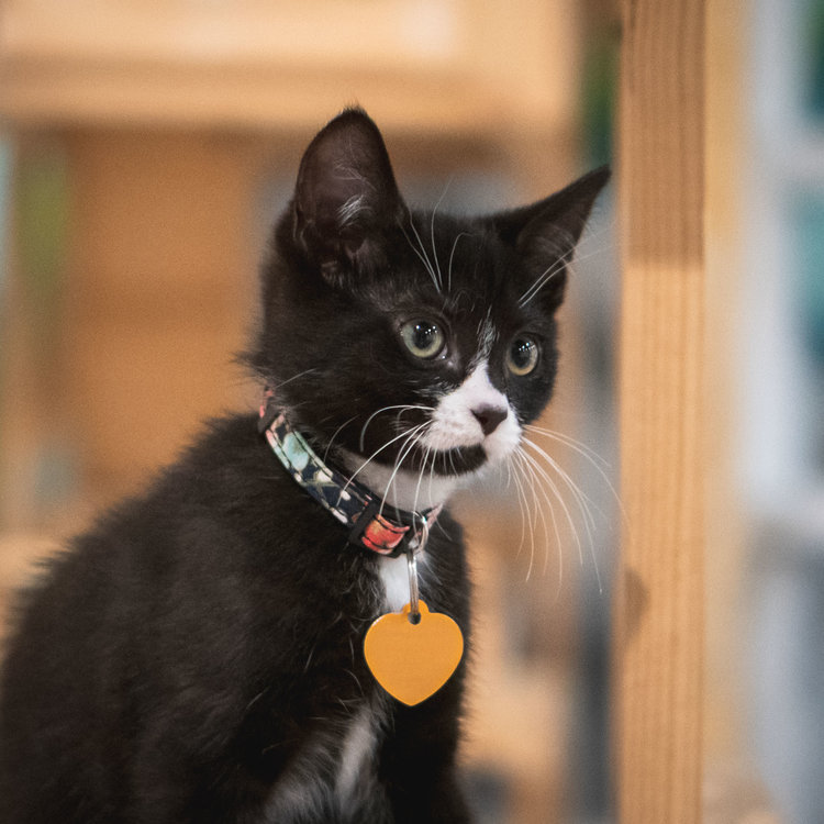 Watson - Adopted 28/6/19