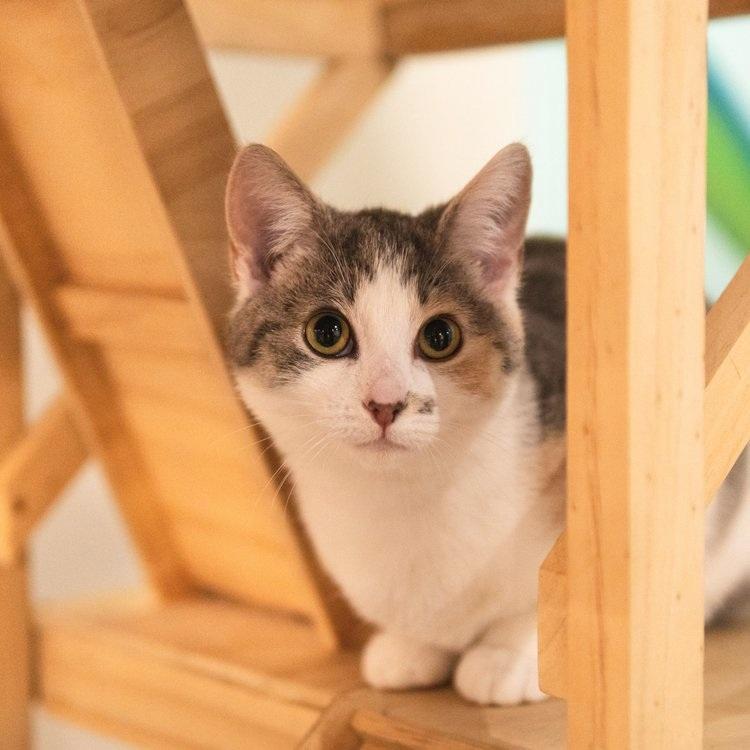 Lola - Adopted 16/8/19
