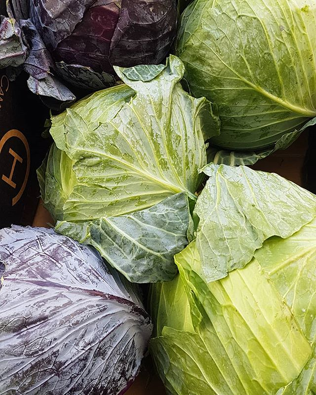 It's provisioning time on Tioga! Cabbage isn't my favorite but it's one of the few veggies that will last for 3 weeks unrefrigerated so here we are. . #provisioning #passageprep #goingoffshore #offshoresailing #offshoresailors #sail #sailing #sailingtheworld #sailors #sailinglife #sailorlife #travel #travelgram #traveltheworld #instatravel #veggie #veggielife #tedsetssail #tedadventures