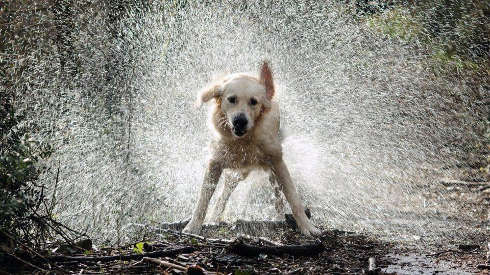 dog_rain.jpg