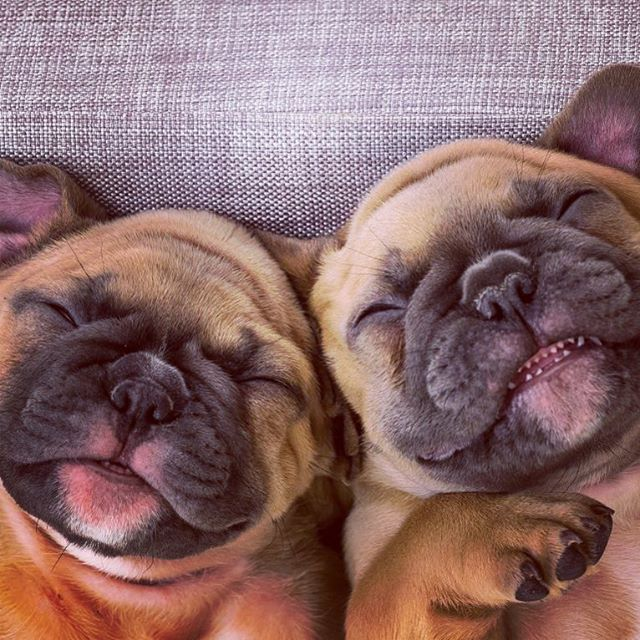 🐾 Pug Life. · · #besties #pugsworld #puglove #twins #naptime #happyfriday #dogsofinstagram #snuggle #dogoftheday #bestfriends #mustlovedogs #pugsofinsta #beseen #cutedogsonly #spotlitepets #pugsofig #worldofpugs #pug_feature