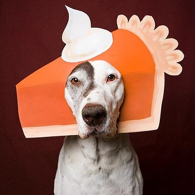 🐾There better be dessert.  Happy Thanksgiving from your friends at Spotlite Pets. · · · #pumkinpie #turkeyday #dogdinner #whippedcream #toofull #thankfulformydog #happythanksgiving #blackfriday #ledleash #spotlitepets #givethanks #ilovemydog #afterdinnerwalk #dogtreats #rubmybelly #thanksgivingdogs