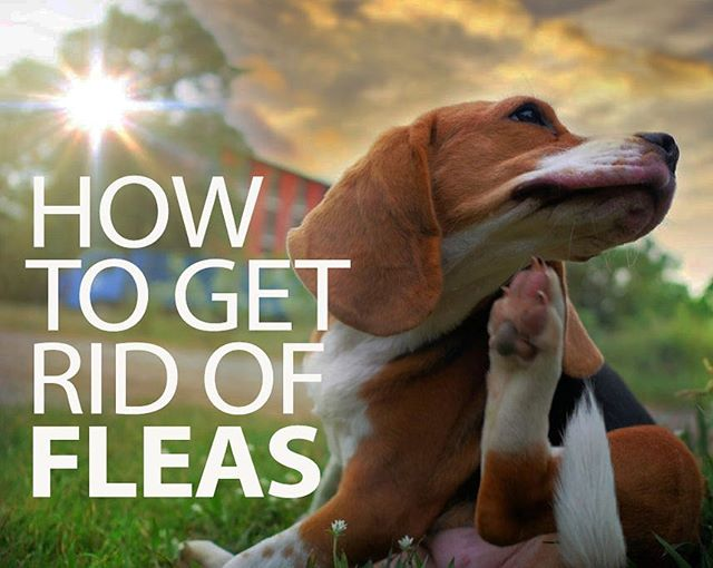 ...And one idea you never thought of! — Link in Bio · · #dogfleas #fleabites #mydoghasfleas #spotlitepets #dogsoap #fleas #itchydog #fleameds #fleaseason #dogscratching #puppylove #bugbites