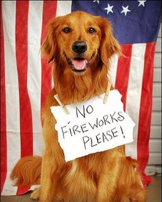 🐾 Happy 4th. Be Safe and Seen from your friends at Spotlite Pets. · #fireworks #4th #ilovemygolden  #spotlitepets #goldenretrieverlife  #petstagram #puppylove #ruffpost #woof #dogday #gloriousgoldens #goldenretrieversworld #goldens #furryfamily #ilovegolden_retrievers #ledleash #thedailygolden #retrieverstagram #goldennugget #leaderofthepack #retrieverstagram #gloriousgoldens