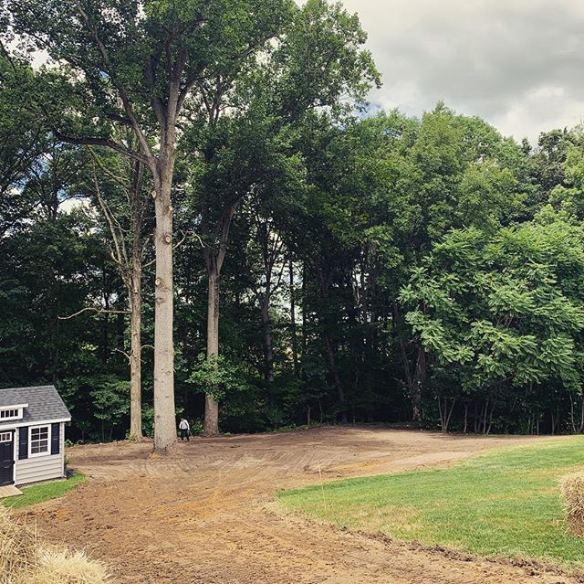 Tree removal and re-grading a yard in Twin Shields in Dunkirk, MD. MD Licensed Tree Expert # 2149.